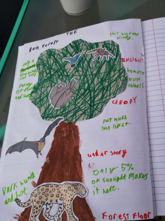 And finally an amazing poster looking into the layers of the rainforest!