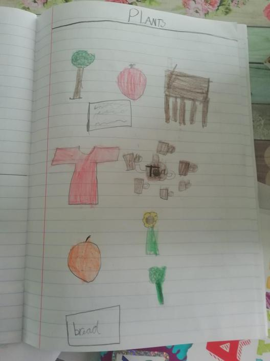 Sams great drawings of plants in his garden
