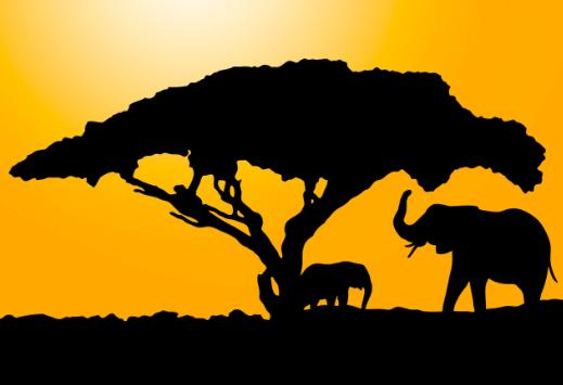 The Awongamela tree