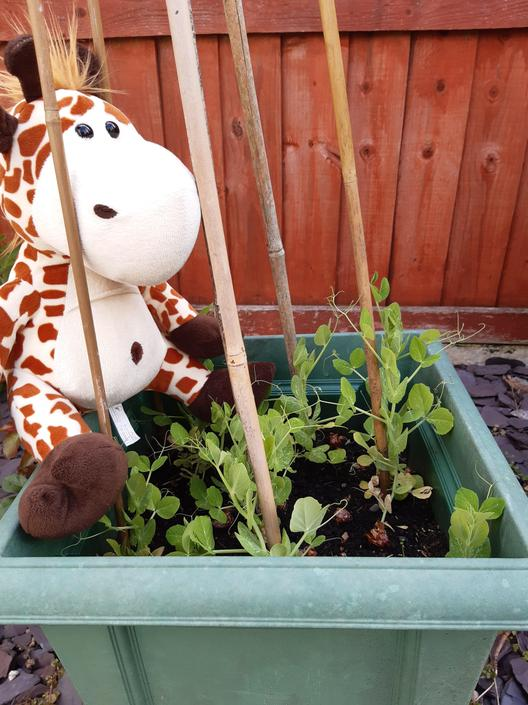 Geraldine has been busy helping Miss Boulton in the Garden yesterday! How can you show an act of kindness today?