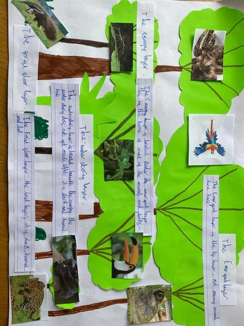 Look at this fantastic rainforest knowledge poster! You are all do amazing geography work and so many are using computing skills to support your knowledge.