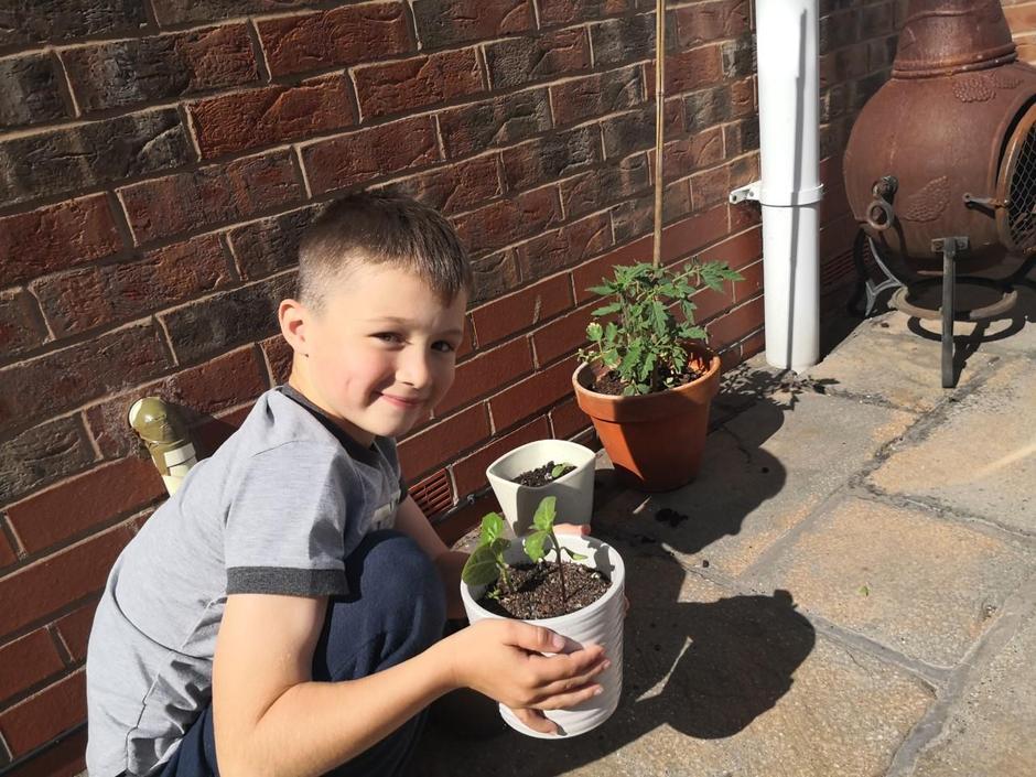 Harry the gardener