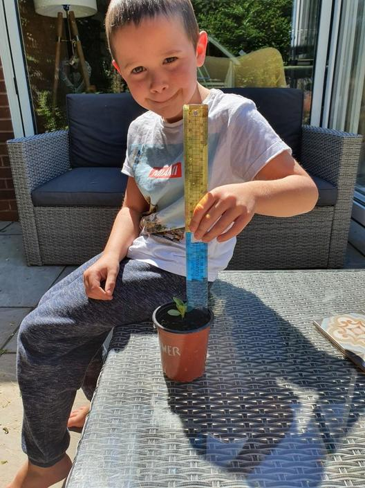 Harry has been taking great care of his sunflower!