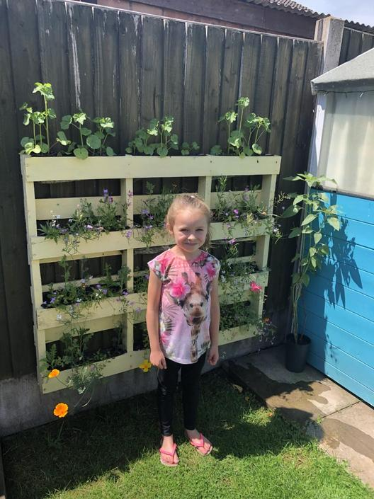 Isla's sunflower is now taller than she is!