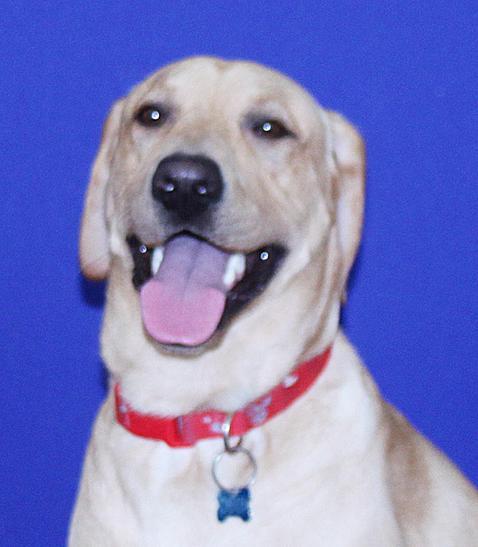 Odin - School Therapy Dog