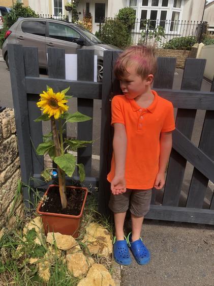 Albert you are a fantastic gardener! ⭐
