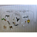 Alex's Venn Diagram (Hooray!) of animals and flying things