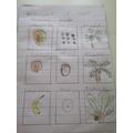 Gabriel's different plants