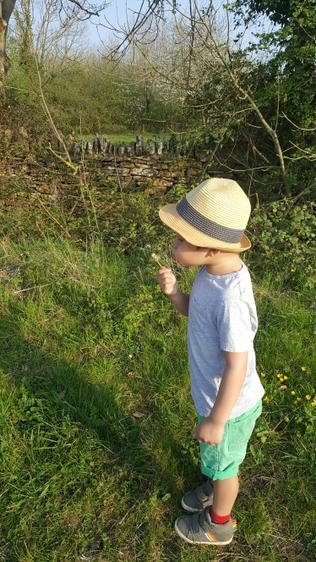 Joshua enjoying his daily walks ⭐️