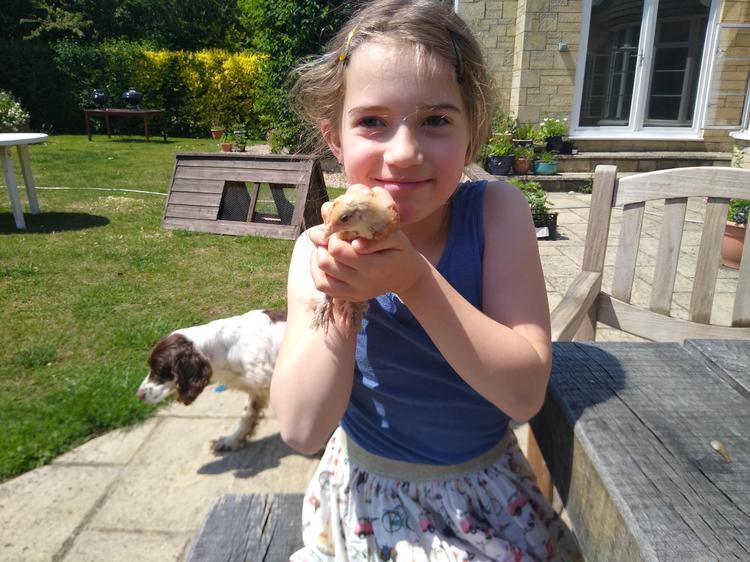 Maisey's bantam chick, Chip
