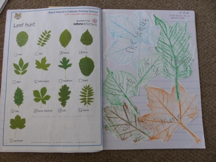What a beautiful piece of work! Fab leaf rubbings⭐