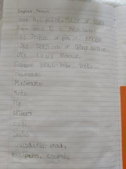 Tevita, look at those nouns! ⭐️