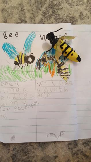 Joshua learning about bees and wasps⭐️