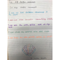 Martha's Magic Seashell poem