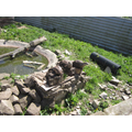 We saw otters being feed