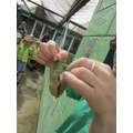we saw 2 different chrysalis