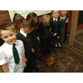 We love our chickens.