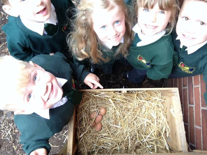We found eggs in the nesting box.