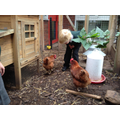 Talking to our chickens.