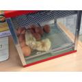 The incubator keeps the eggs and chicks warm.