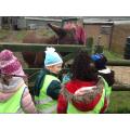 We met the donkeys.
