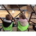 We found the Three Billy Goats Gruff.