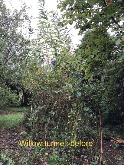 Willow tunnel: before