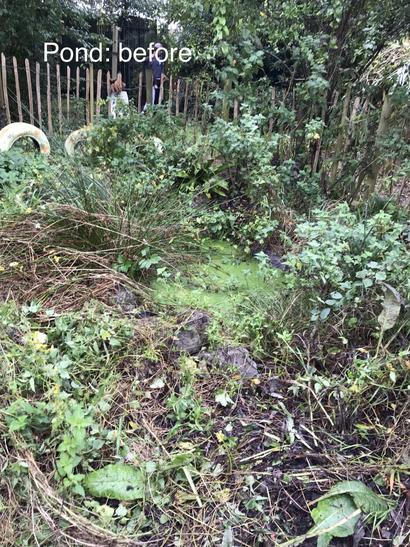 Pond: before