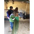 Pebbles Nursery Rare Breeds Trip 2018