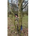 Harrison climbing a tree!