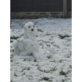 THE SMALLEST ONE: Alfie - Snowman