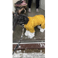 Mr Halliwell's dog has snow balls for feet!