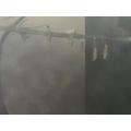 Sienna's Caterpillar Cocoons.jpg