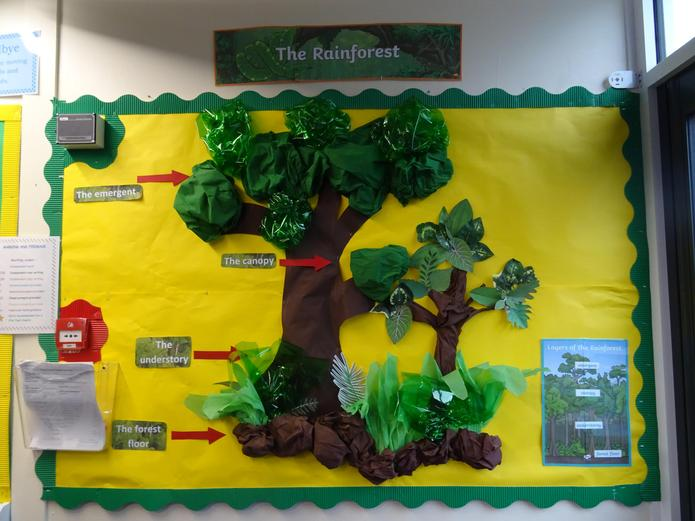 Layers of the Rainforest display.