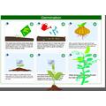 Antoni's germination poster
