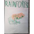 Antoni's Rainforest Leaflet