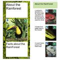 Hayden's Rainforest Leaflet