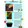Antoni's Growing Plants Poster