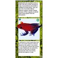 Cerys-Ann Rainforest Leaflet