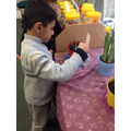 Looking after the plants in our classroom.