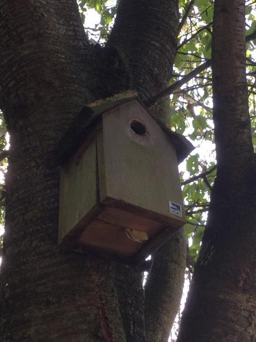 In bird boxes