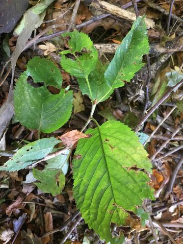 On leaves