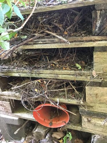 In the bug hotel
