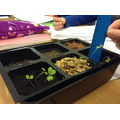 Plant growth in compost and a mixture of materials