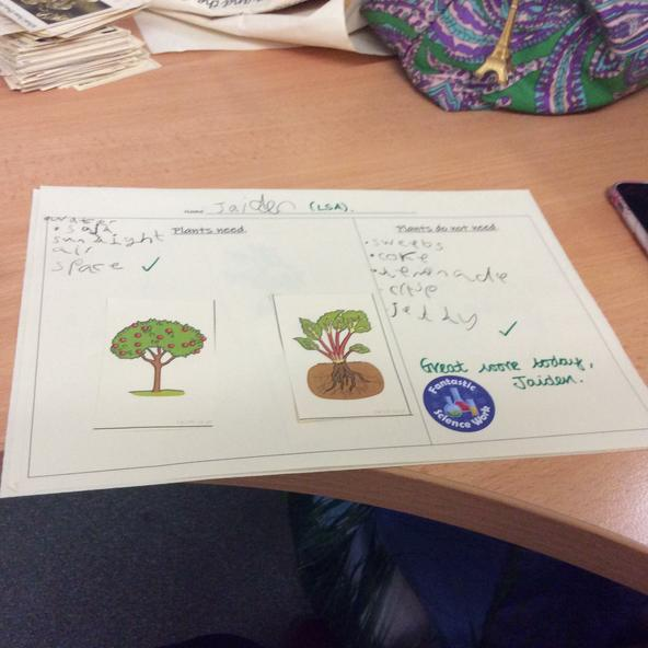 Y2 working on plants.