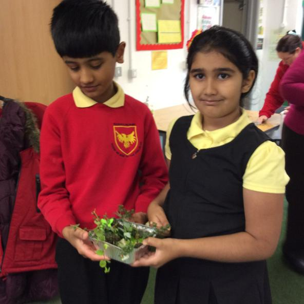 Presenting our habitat-will the frog survive?
