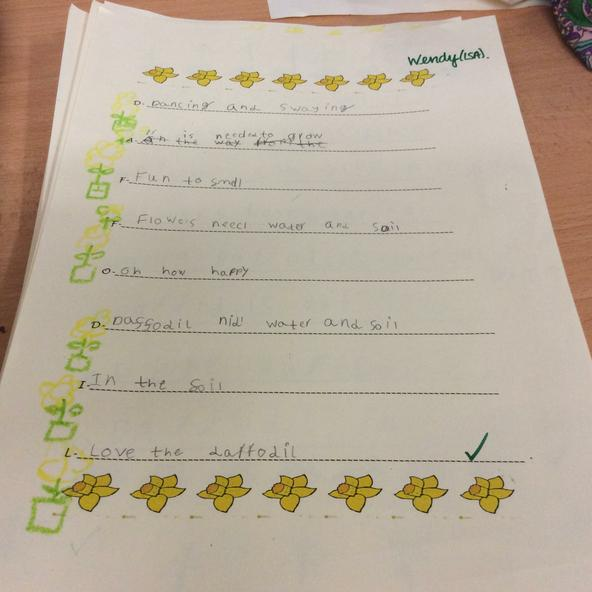 Y2 acrostic poems about daffodils.