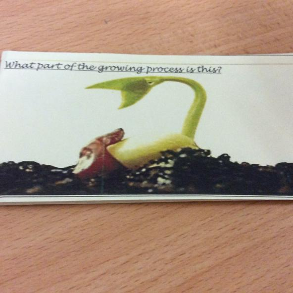 Y2 know the word germination!