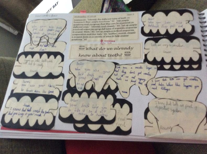What did yr4 know about teeth/