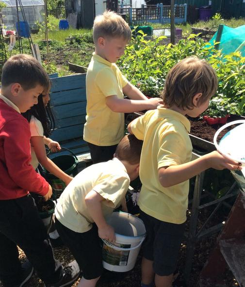 Planting on the allotment.